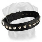 Most Beautiful Nylon Collar - 1 Row Studs Rottweiler Collar - 1 1/2 inch Wide