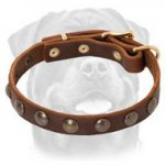 Exquisite Leather Dog Collar with Brass Round Studs