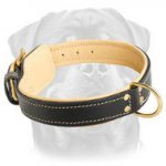 Royal Nappa Padded Hand Made Elegant Leather Canine Collar for Rottweiler