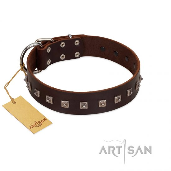 """Kingly Grace"" FDT Artisan Brown Leather Rottweiler Collar with Silver-like Dotted Studs"