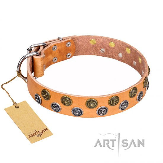 """Precious Sparkle"" Exclusive Style FDT Artisan Tan Leather Collar for Stylish Rottweiler Outings"