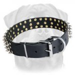 Spiked Leather Dog Collar for Rottweiler