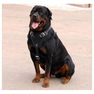 Rottweiler Agitation/ Protection Leather Harness