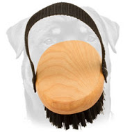Bristle Dog Brush for Everyday Grooming