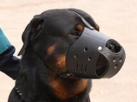 Everyday Rottweiler Leather dog muzzle