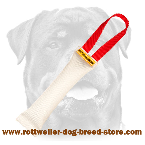 Rottweiler puppy fire hose tug for safe training