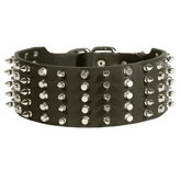 3 inch Spiked and Studded Rottweiler collar