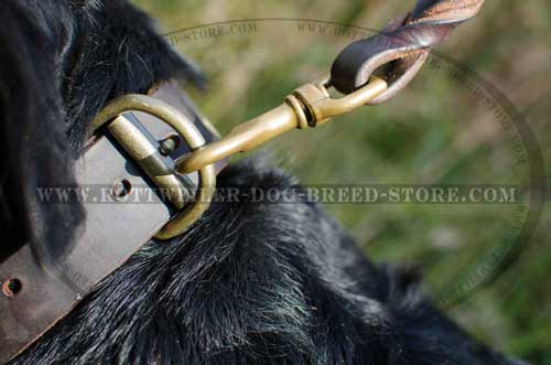 Handmade Leather Rottweiler Collar Has Welded D-Ring for Lead