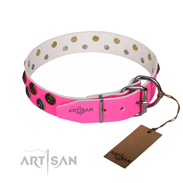 Everyday walking leather collar with studs for your canine