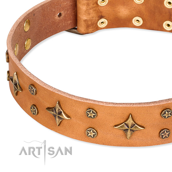 Full grain genuine leather dog collar with remarkable studs
