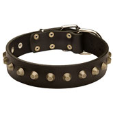 Gorgeous Wide Leather Dog Collar