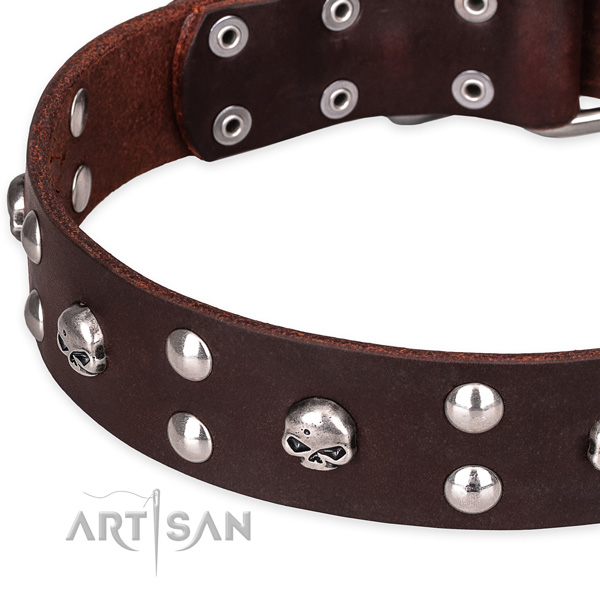 Everyday leather dog collar with stunning embellishments
