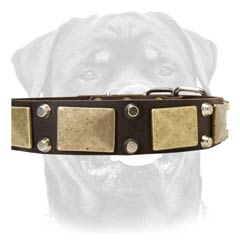 Multitasking leather dog collar