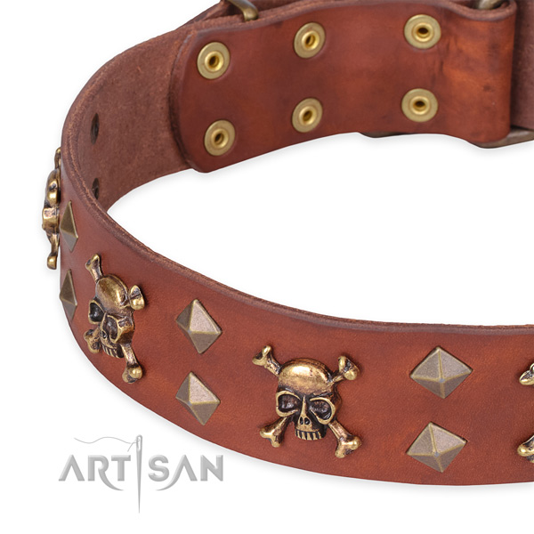Casual style leather dog collar with sensational studs
