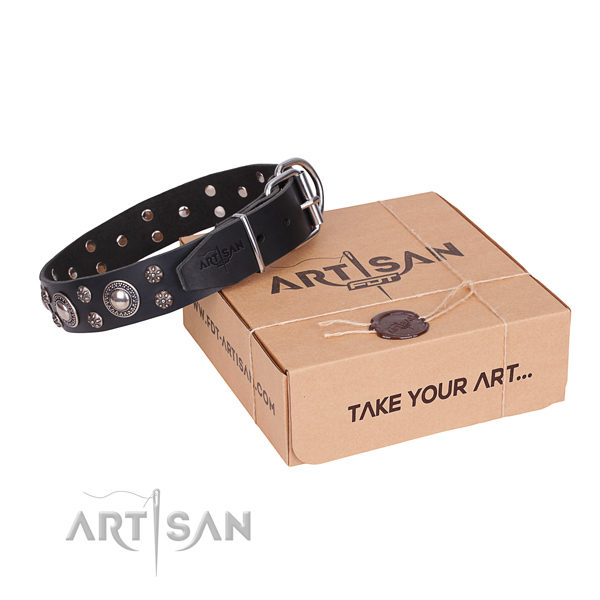 Casual leather dog collar with remarkable studs