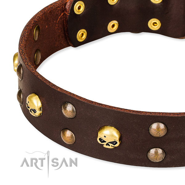 Everyday leather dog collar for training