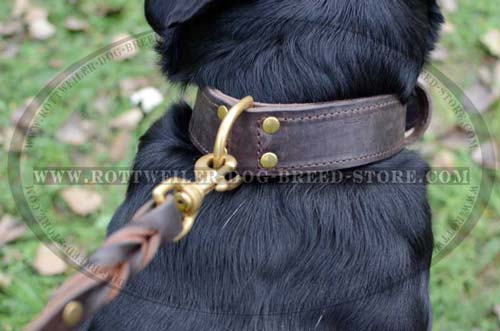 Buckle Collar with Rear Dee ring for Leash and Tags