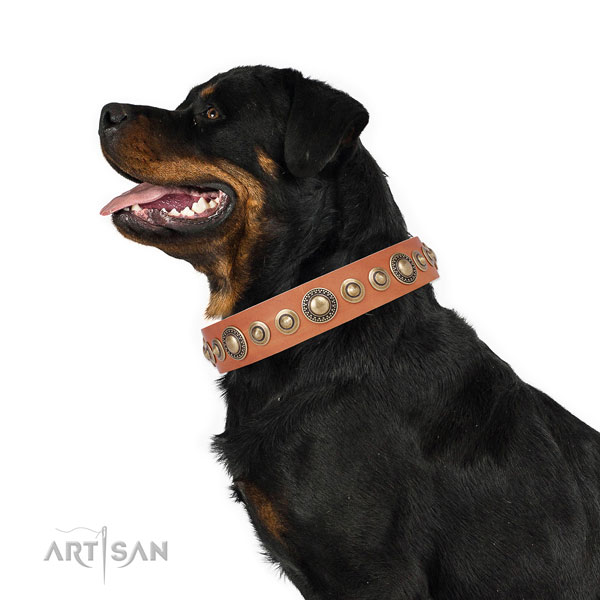Strong buckle and D-ring on leather dog collar for walking in style