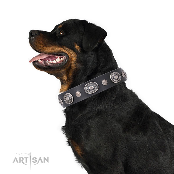 Corrosion proof buckle and D-ring on genuine leather dog collar for walking