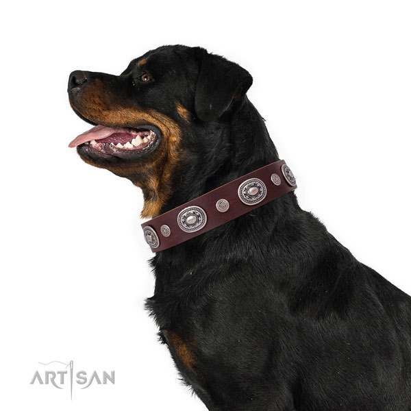 Corrosion resistant buckle and D-ring on full grain leather dog collar for everyday walking