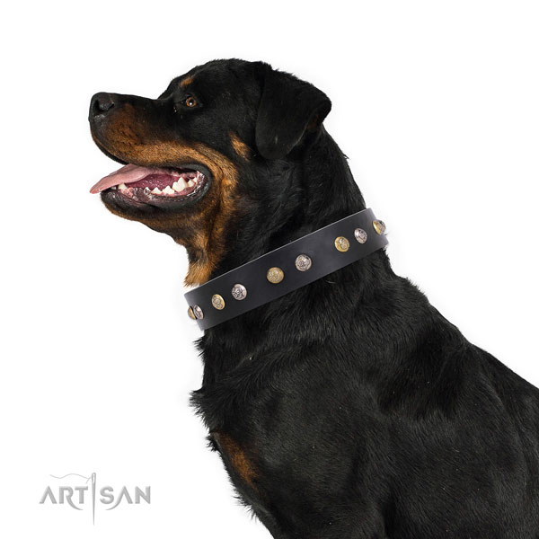 Leather dog collar with rust resistant buckle and D-ring for everyday use