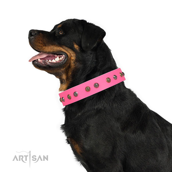 Daily use studded dog collar made of top notch leather