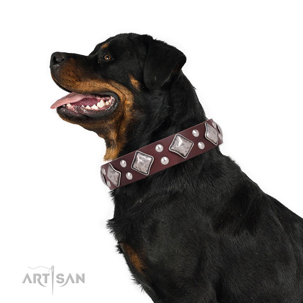Walking embellished dog collar made of durable natural leather