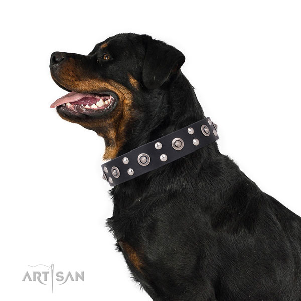 Comfy wearing decorated dog collar made of high quality genuine leather