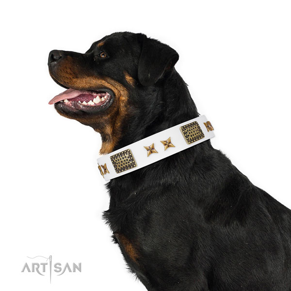 Stylish design studs on daily use full grain genuine leather dog collar