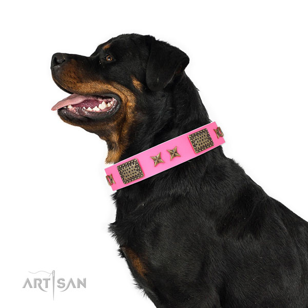 Remarkable adornments on walking full grain leather dog collar