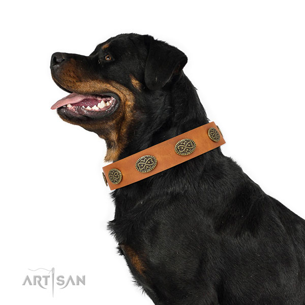 Impressive decorations on comfortable wearing genuine leather dog collar