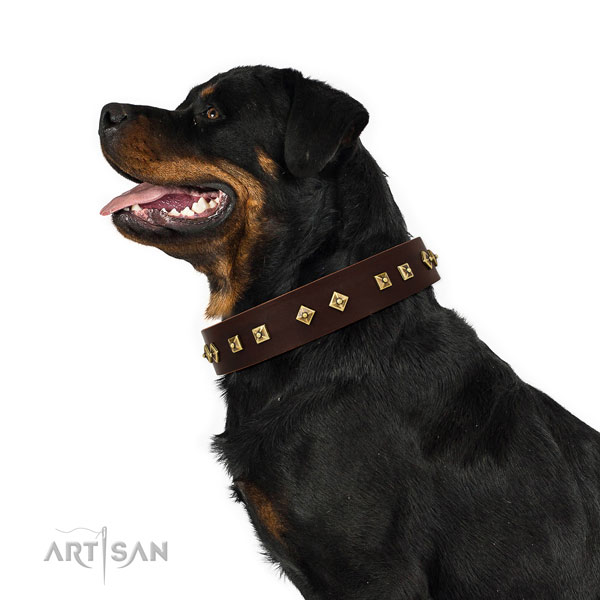 Significant adornments on walking full grain natural leather dog collar