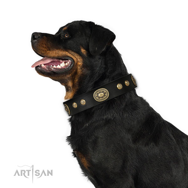Unique decorations on daily walking dog collar