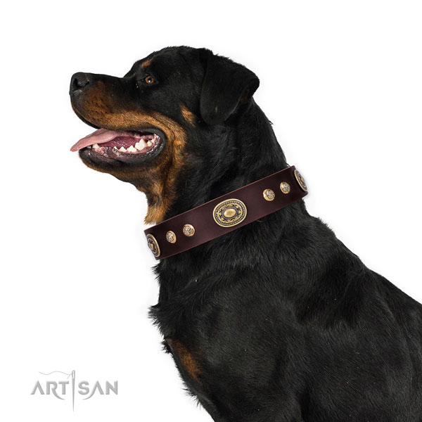 Unusual studs on handy use dog collar
