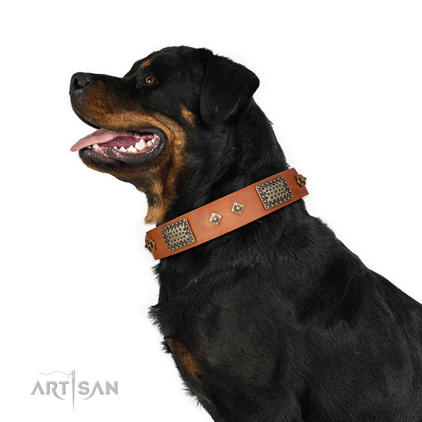 Everyday use dog collar of natural leather with fashionable adornments