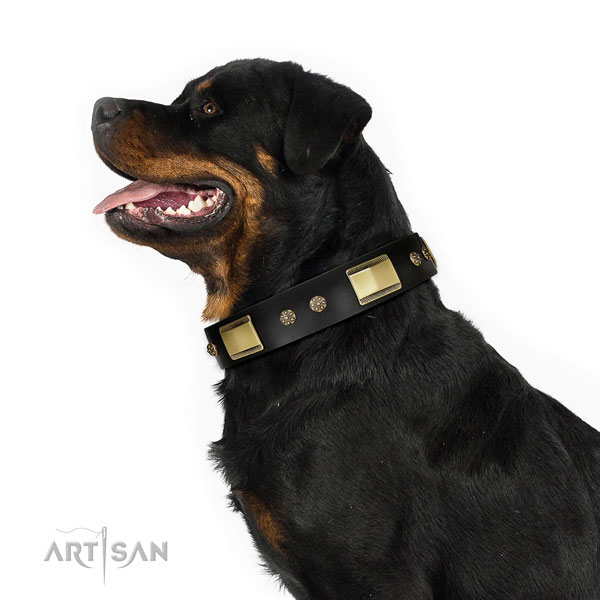 Comfortable wearing dog collar of genuine leather with impressive adornments