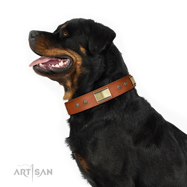Stylish walking dog collar of leather with exquisite decorations