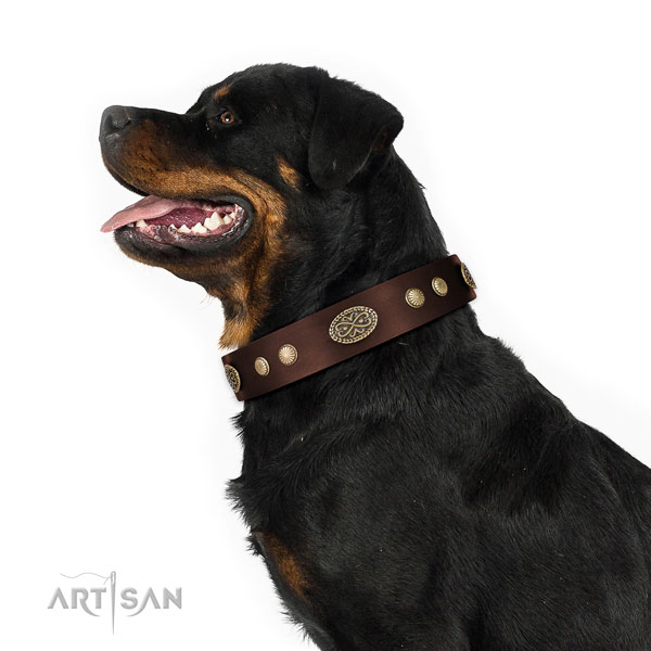 Corrosion proof D-ring on Genuine leather dog collar for everyday use