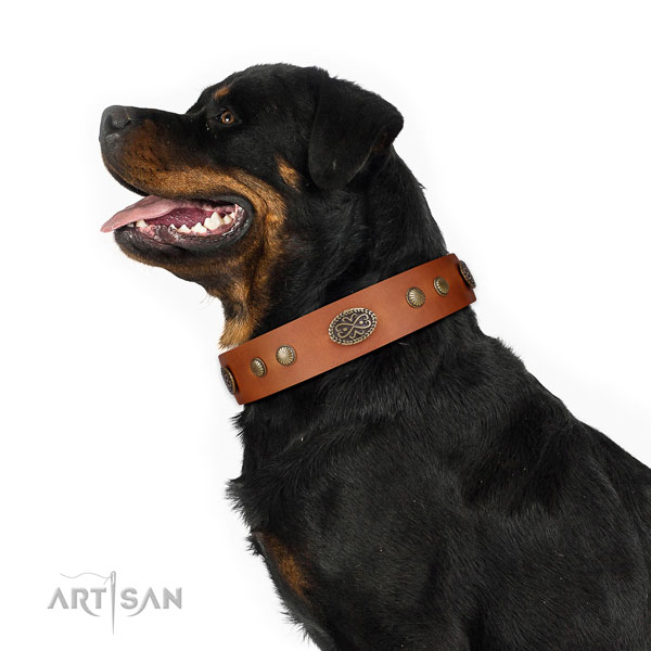 Corrosion resistant hardware on Genuine leather dog collar for stylish walking