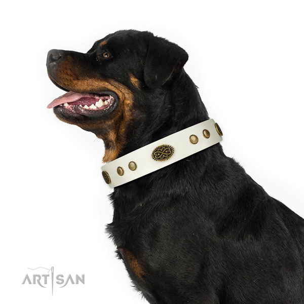 Durable hardware on full grain natural leather dog collar for daily use