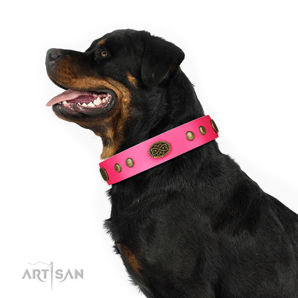 Durable traditional buckle on leather dog collar for everyday walking