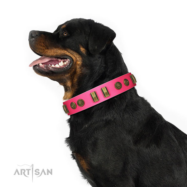 Everyday use dog collar of leather with exceptional decorations