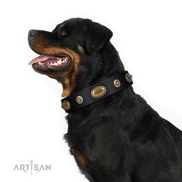 Handy use dog collar of leather with remarkable decorations