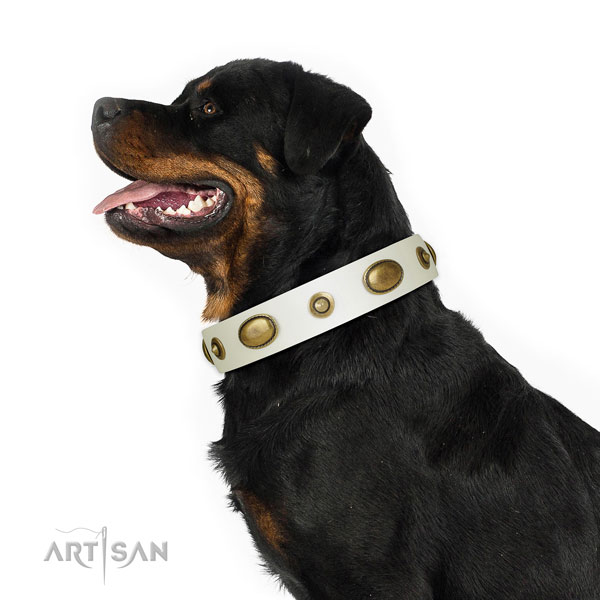 Everyday use dog collar of leather with extraordinary adornments