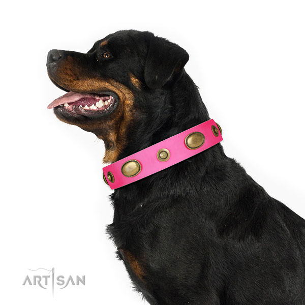 Comfortable wearing dog collar of natural leather with fashionable adornments