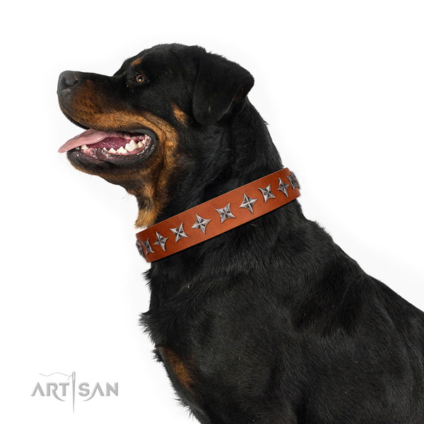 Fine quality full grain genuine leather dog collar with awesome studs