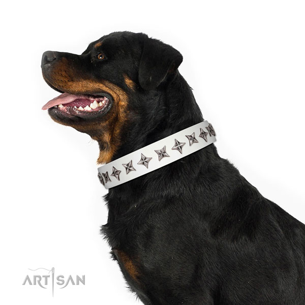 Top quality full grain natural leather dog collar with stunning embellishments