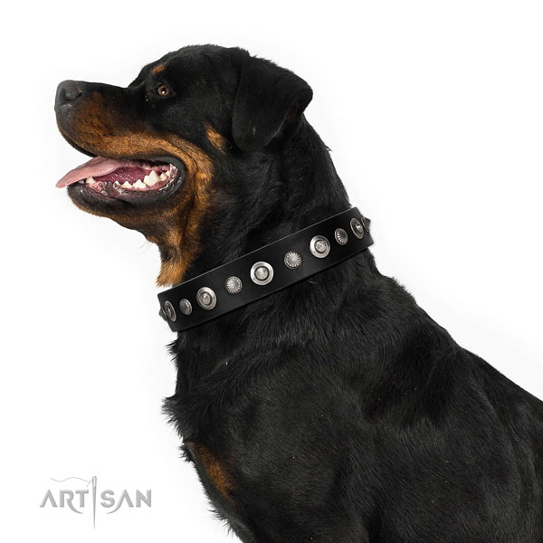 Best quality full grain natural leather dog collar with remarkable adornments