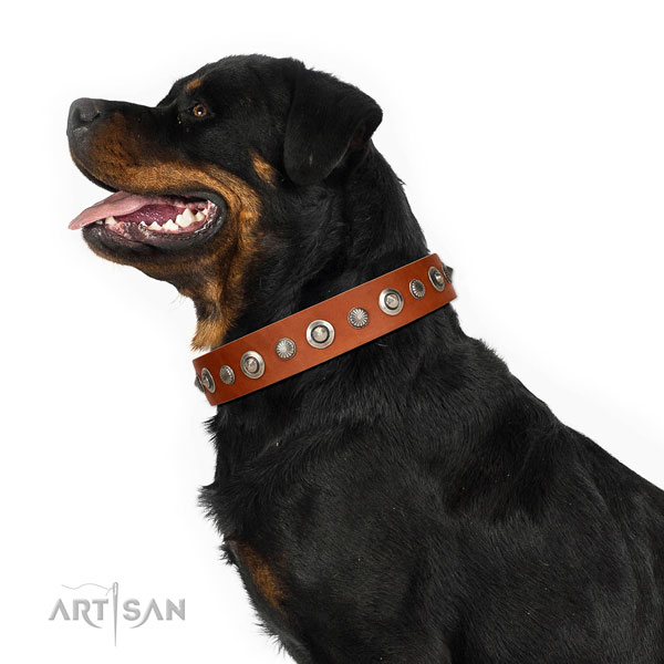 Durable full grain leather dog collar with extraordinary adornments