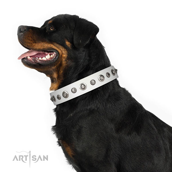 Leather collar with reliable fittings for your stylish doggie